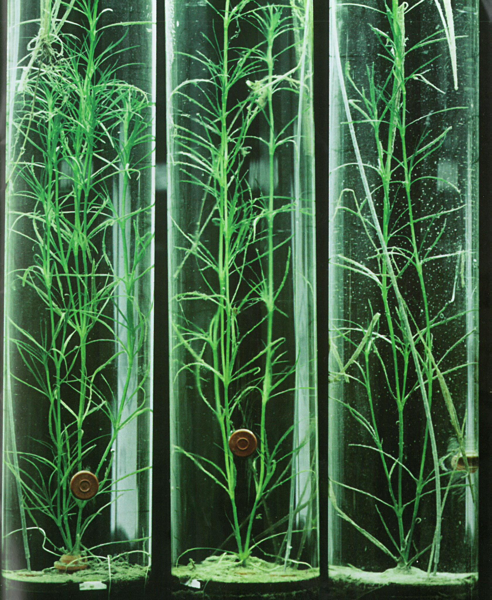 submerged seagrasses