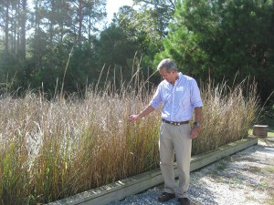 "NC State aquaculture researcher Harry Daniels checks out the experimental discharge ""garden"" at MARC."