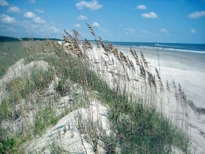 Plants on oceanside dunes blow in the breeze.