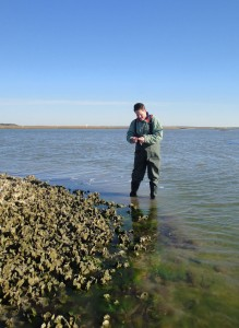 Michael Piehler examines an oyster reef in Bogue Sound.