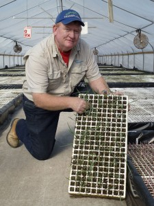 Steve Mercer shows a tray of bitter panicum seedlings.