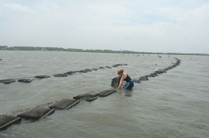 Duke researchers take samples from an oyster lease.