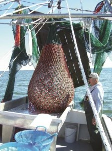 In Search of a Better Way: Adjusting Shrimp Trawl Gear : Coastwatch