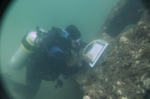 A diver records details of the bow underwater.