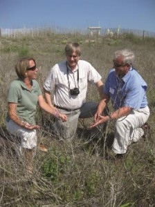 Melanie Doyle, Randy Westbrooks and Rick Iverson examine what remains of beach vitex on the back of a dune.
