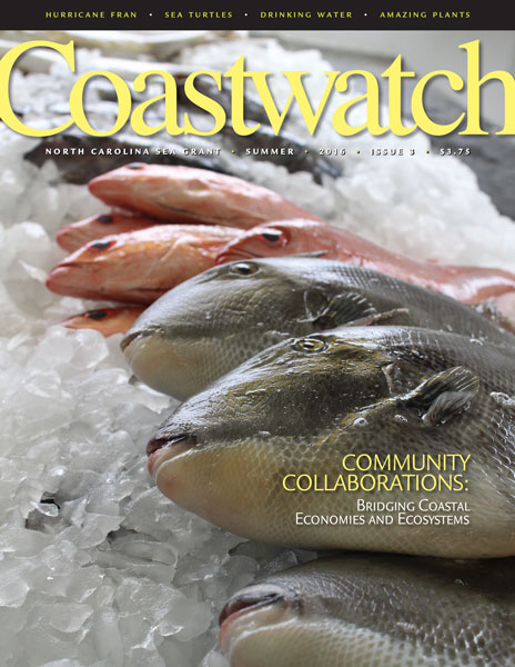 Pic of summer 2016 cover of Coastwatch, picture of whole fish on ice. Photo by Vanda Lewis