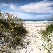 Grasses sway at Hammocks Beach State Park.