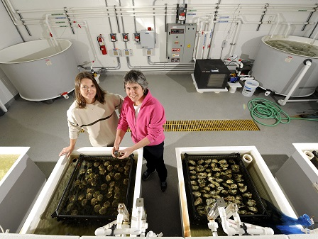 Ami Wilbur at UNCW shellfish hatchery