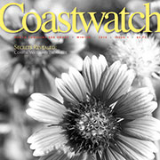 Cover of Winter 2016 Coastwatch. Image of blanket flower