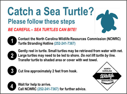 turtle stranding sign