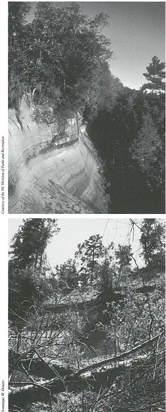 TOP: In earlier times, the view of the cliffs was clear. Photo courtesy of NC Division of Parks and Recreation. BOTTOM: A research project aims to offer a renewed vista. Photo by Dominique M. Donato.