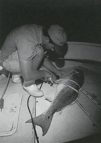 George Beckwith tags red drum