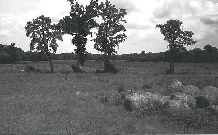 working farm along Town Creek