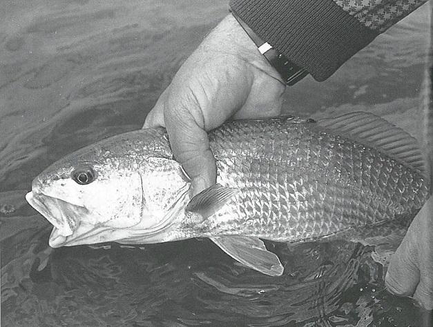 Jim Bahen handles fish