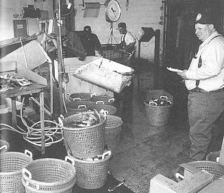 Murray-Nixon fish company