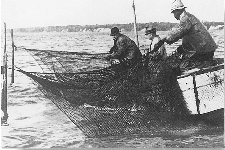 men checking pound net