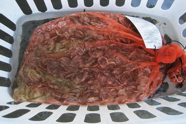 bag of spat