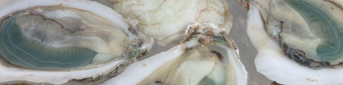 Green-gill oysters