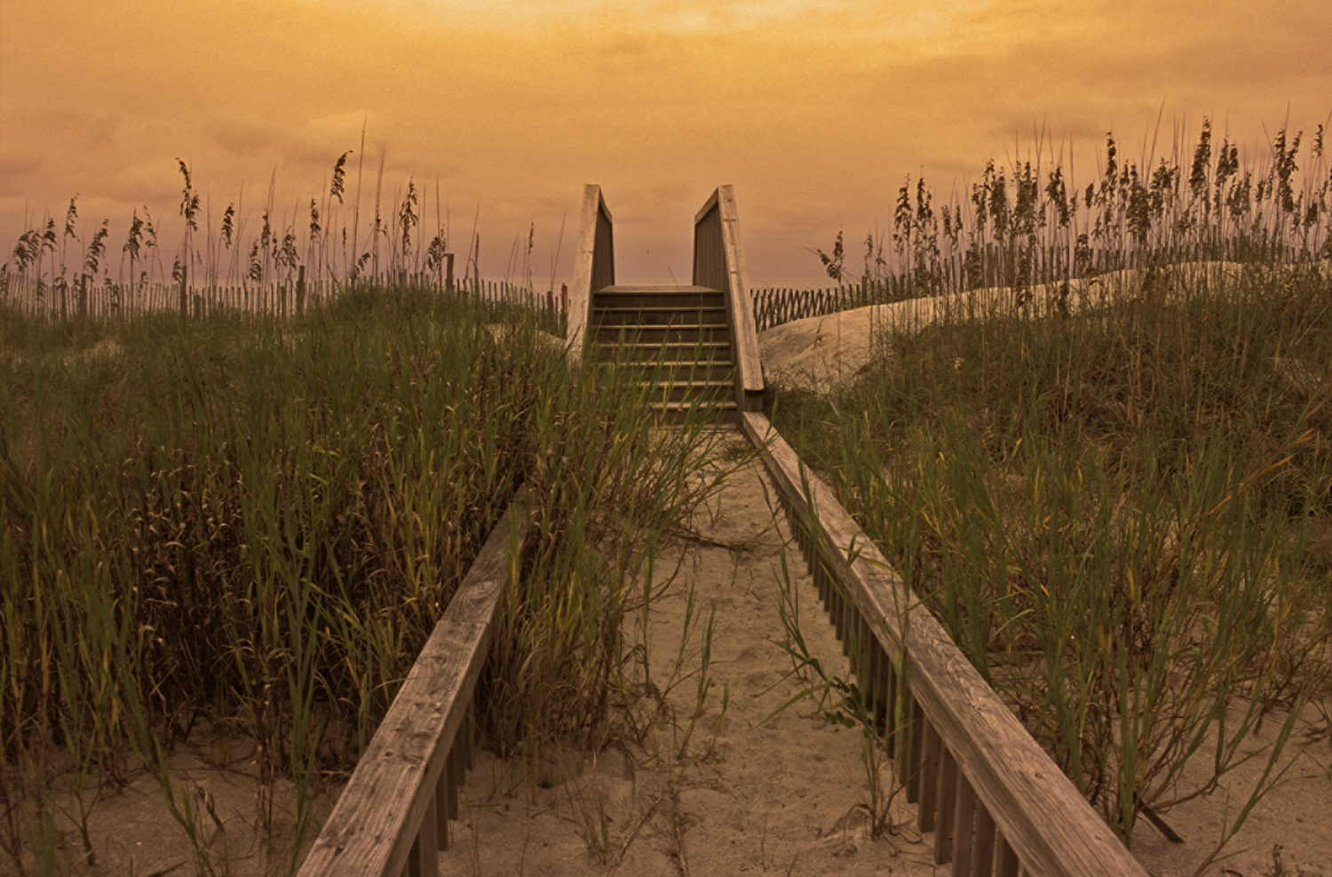 Dune walkover at Topsail Beach. By Scott D. Taylor.