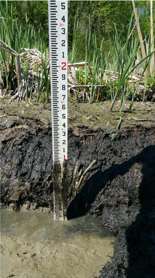 New research is testing two methods to improve constructed wetland efficiency. Photo: Michael Burchell.