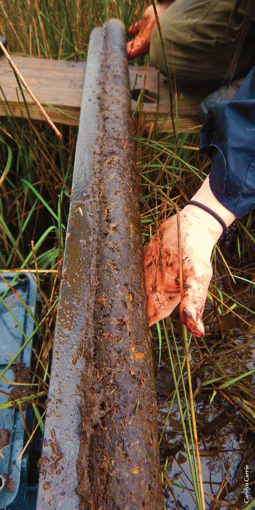 Core samples from the Marine Corps base revealed carbon stored in the marsh for almost 2,500 years.