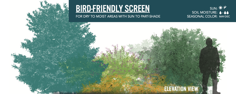 Image of bird-friendly screen landscaping design