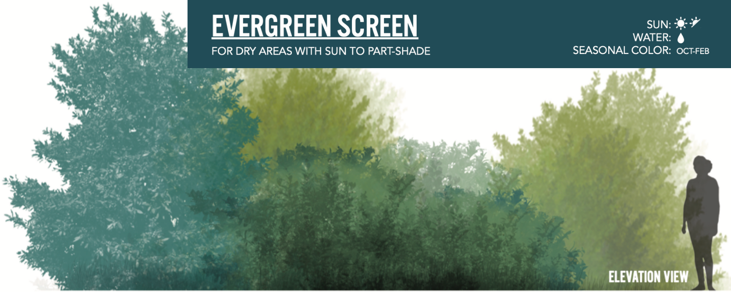 Image of the Evergreen Screen landscaping design