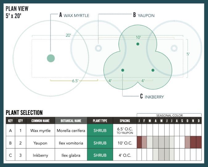 Evergreen screen plan view and plant selection chart