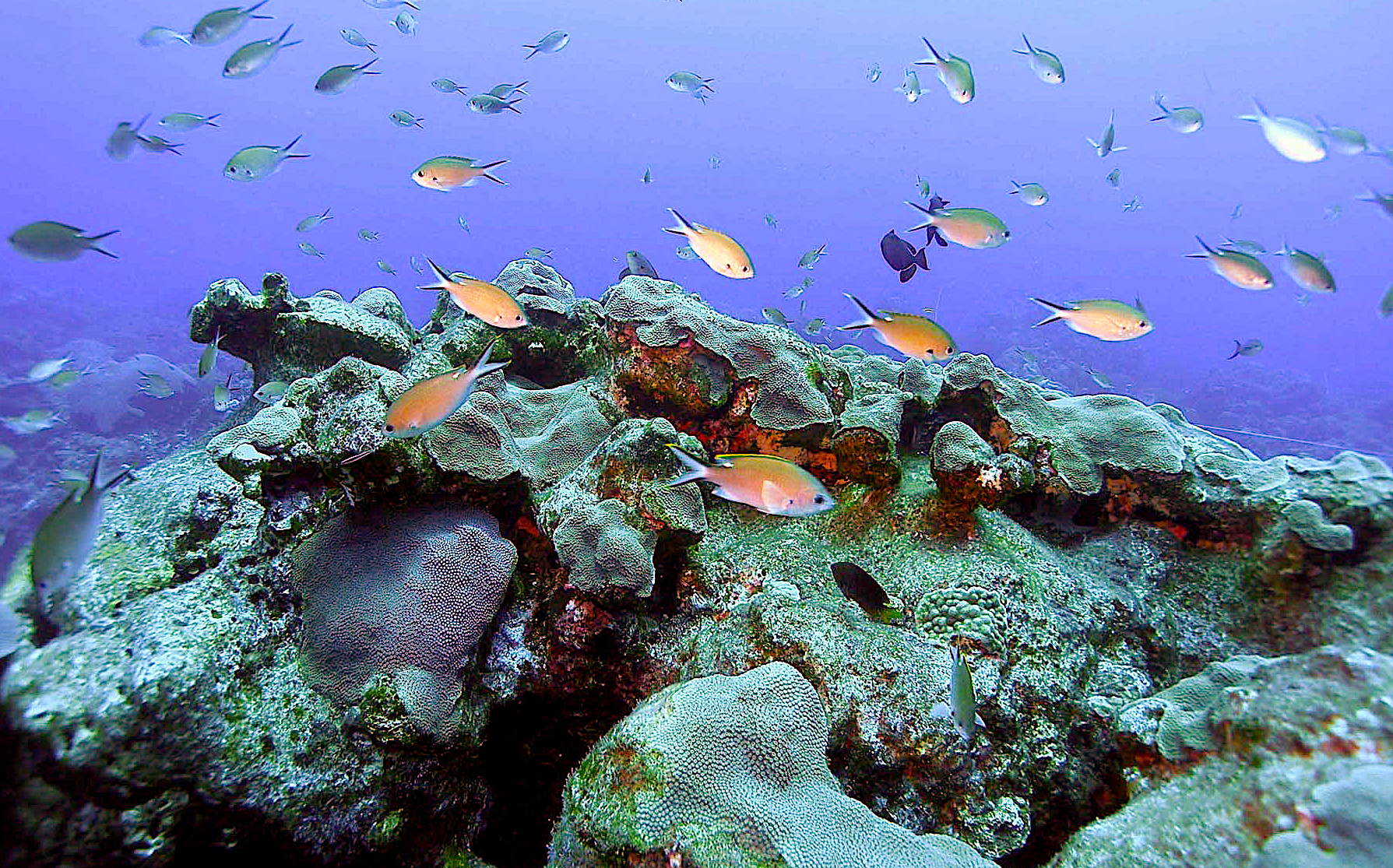 Reef fish, courtesy of Emma Hickerson, NOAA FGBNMS Research Coordinator