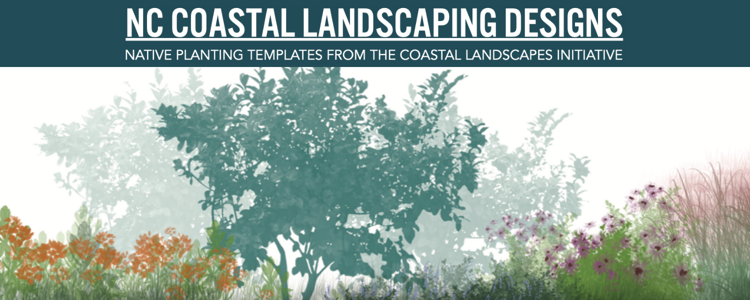 NC Coastal Landscaping: Native Plant Templates from the Coastal Landscapes Initiative