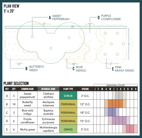 Pollinator-friendly border plan view and plant selection