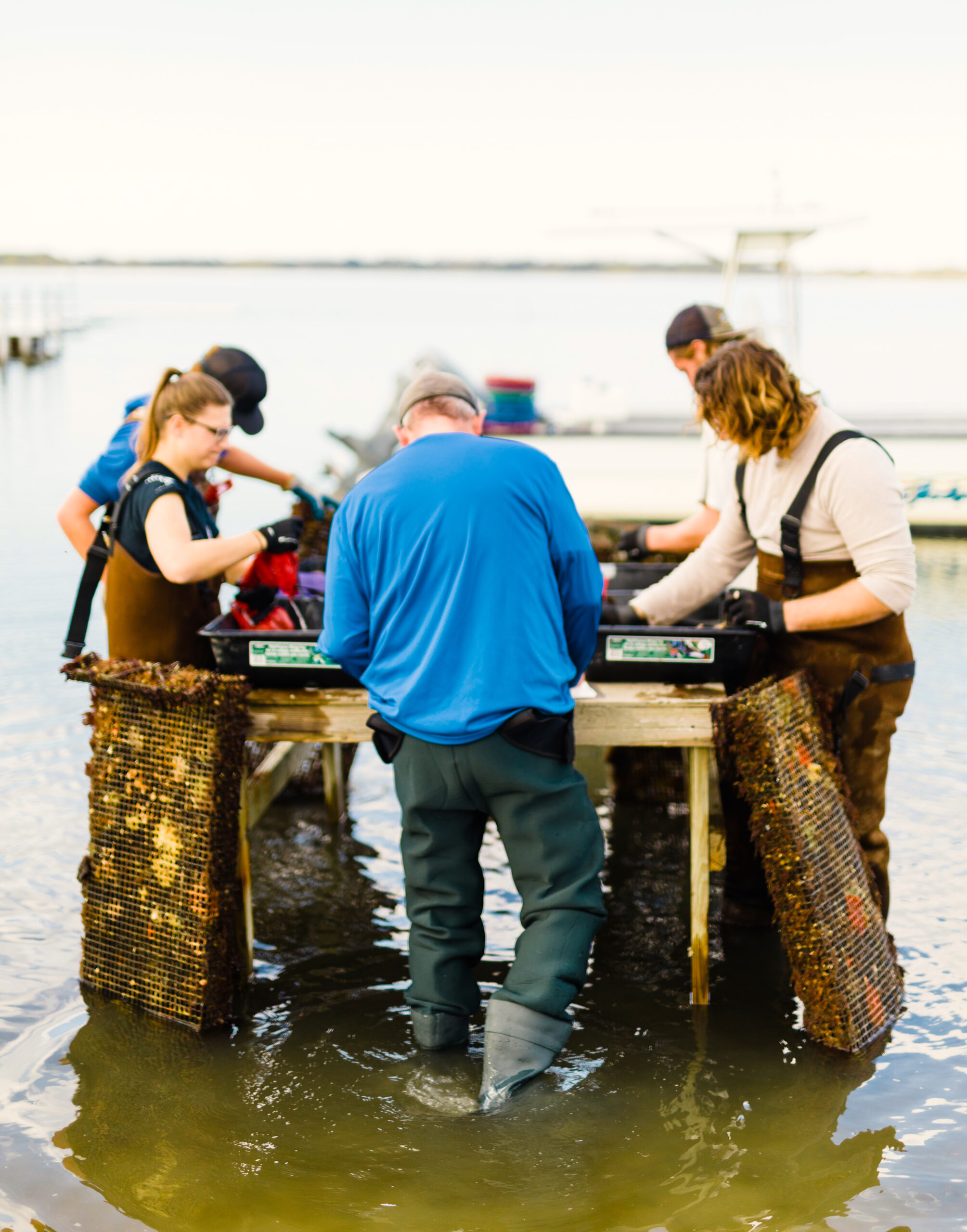 Students were among key members of a pre-pandemic Sea Grant research team that identified best methods and gear for oyster growout in various locations along the coast. Credit:Baxter Miller