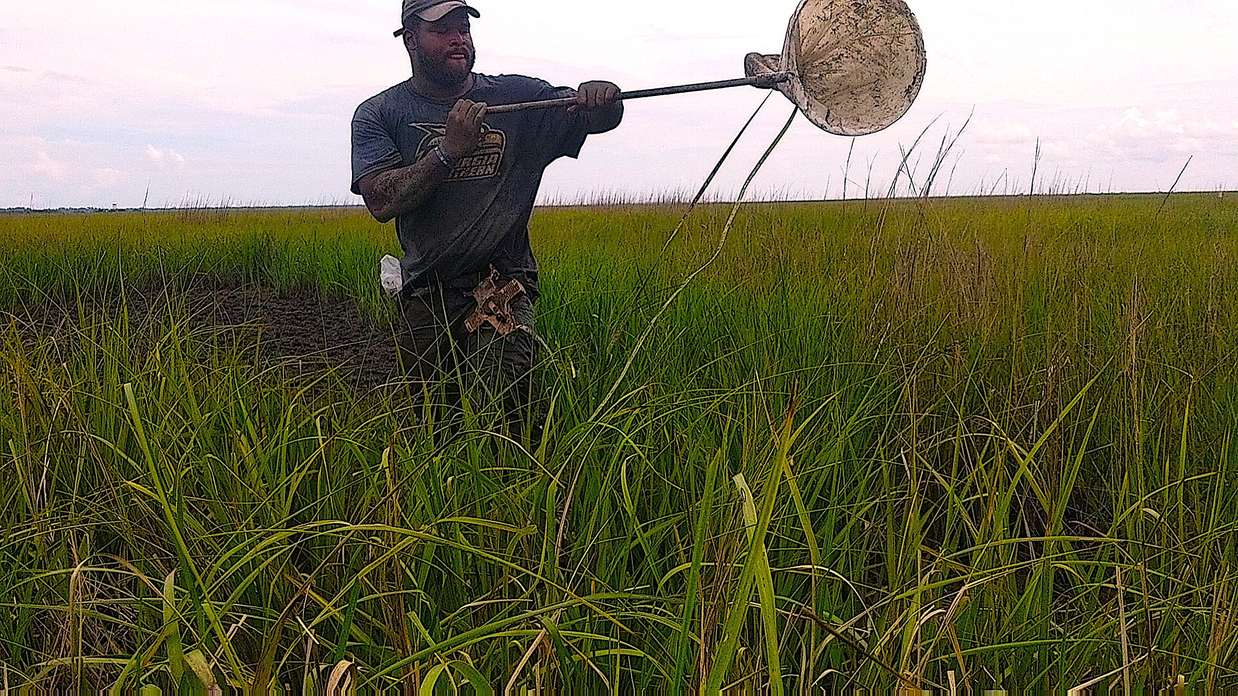 Alex Troutman (above) conducts research on the diets of seaside sparrows, a species endemic to marshes and wetlands. With sea levels continuing to rise and continuous coastal development, these sparrows are losing their habitat. Photo by Adam Rosso.
