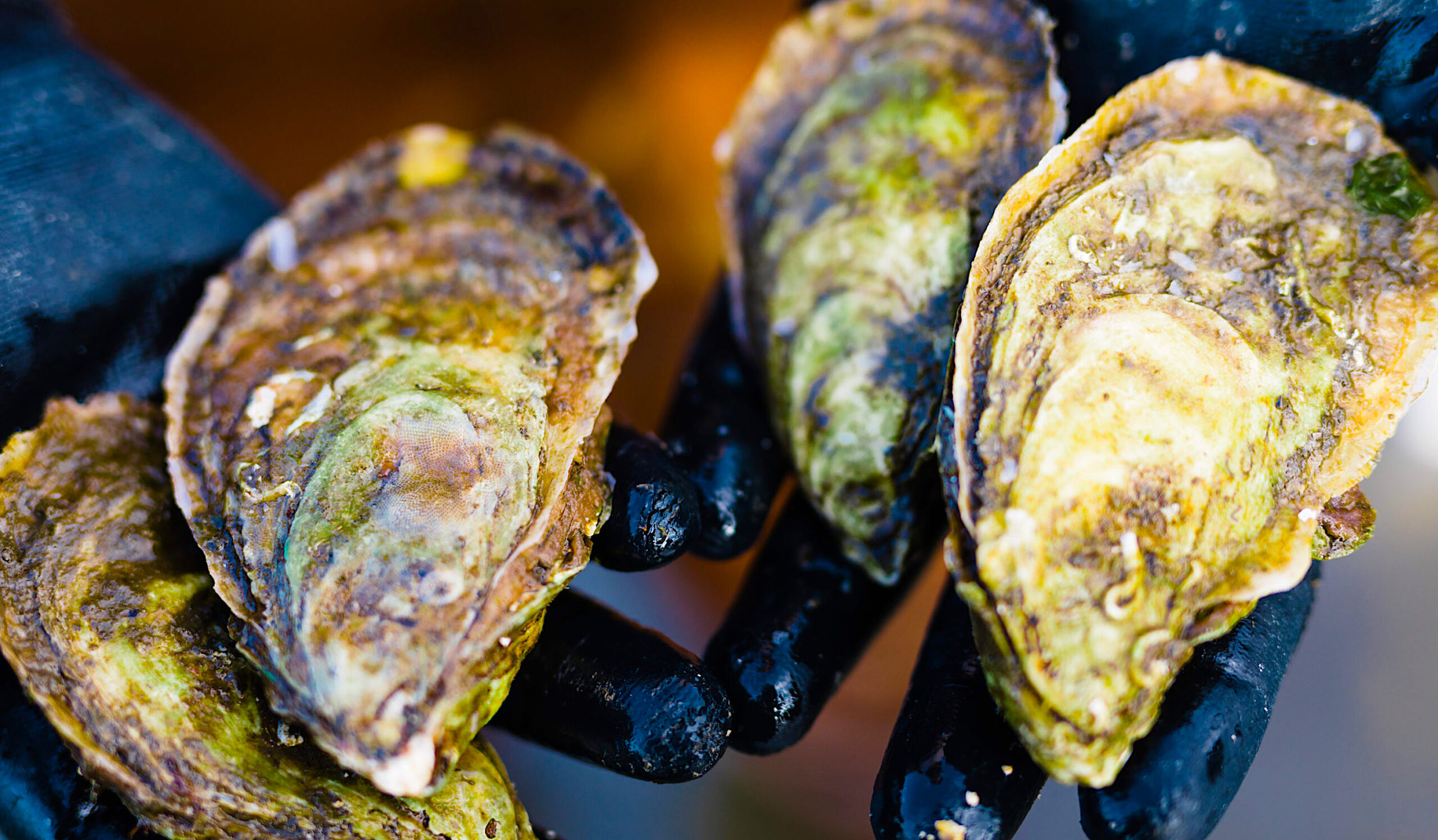 NC oysters. Photo by Baxter Miller.