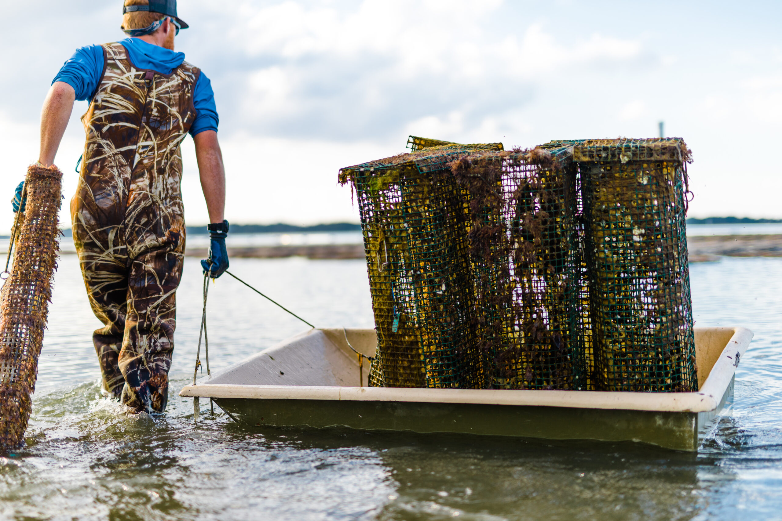 A man pulling a boat with oyster cages in it