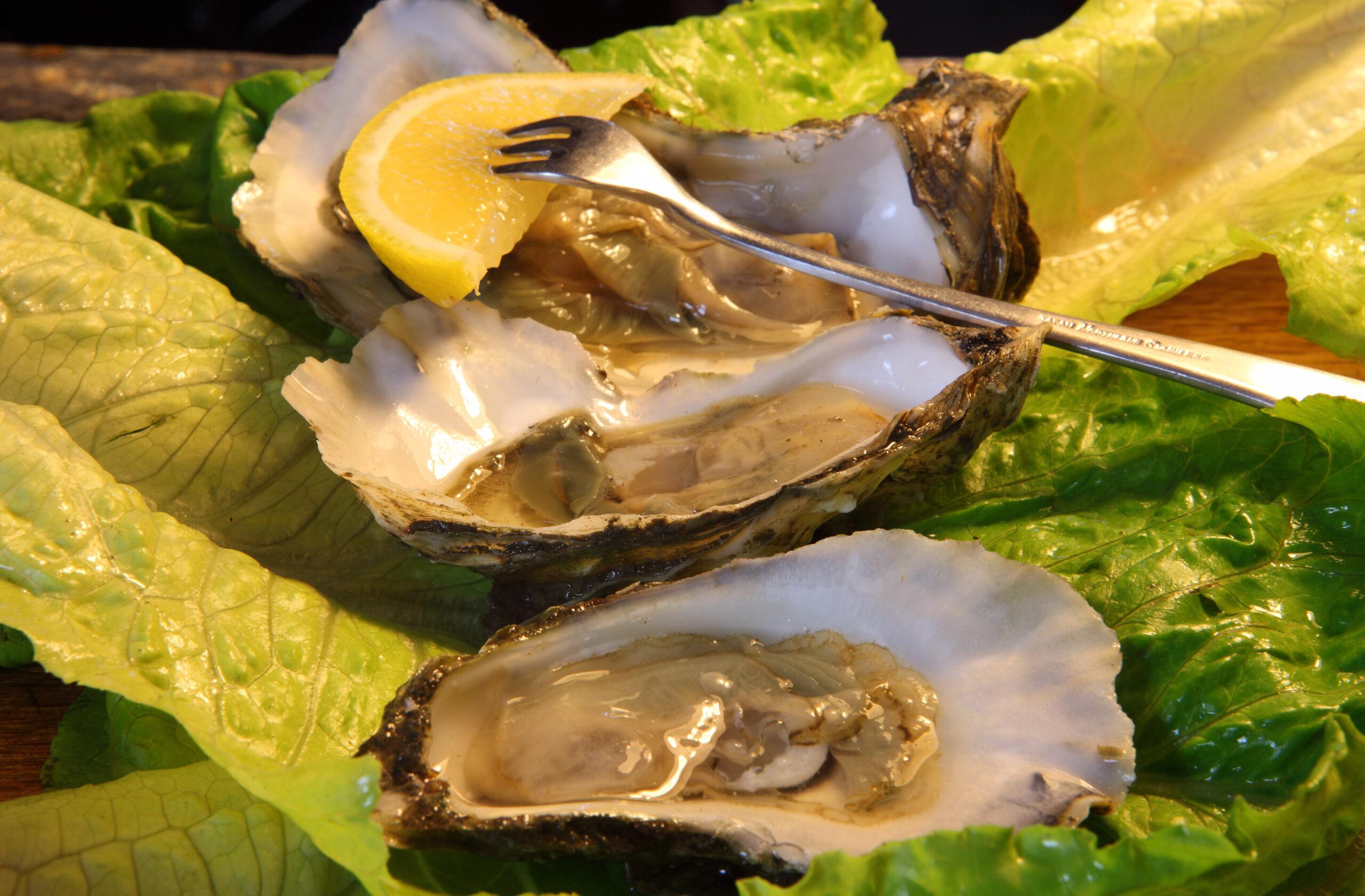 NC oysters. VisitNC.com