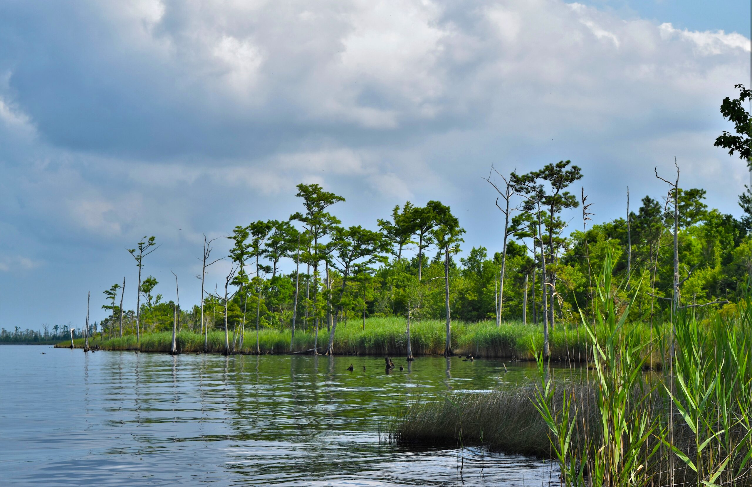 Manda's work has shown that wind tides are in fact the major drivers of saltwater into the Buckridge Coastal Reserve. Credit: NC Wetlands.
