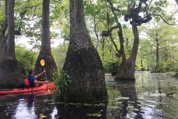 Man kayaking between trees
