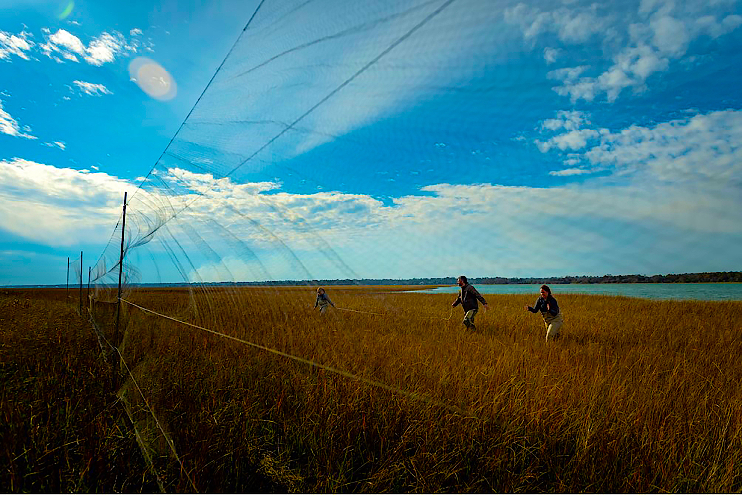 image of researchers in the marsh