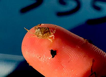 instar on a fingertip