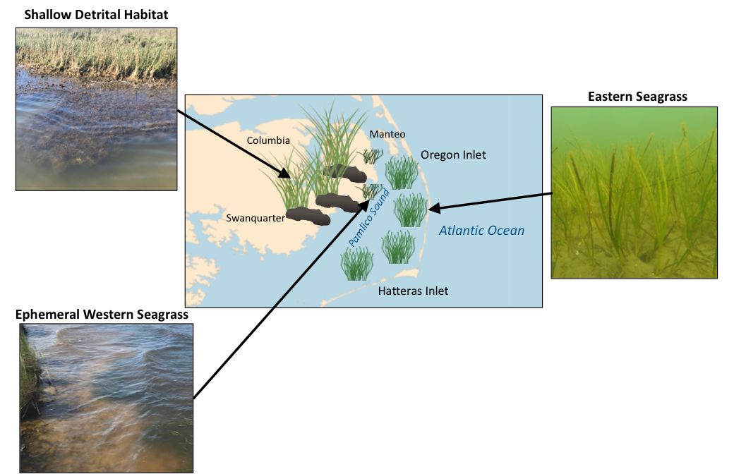 The locations of juvenile blue crab habitats Photo by Erin Voigt