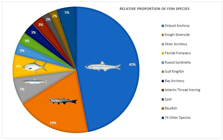 The relative proportions of fish species to the overall pooled abundance of fish caught between 2004 and 2014.