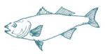 mm1fish