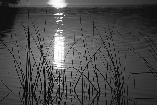 Reflection of sun on water.