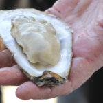 Oyster in hand, by Vanda Lewis