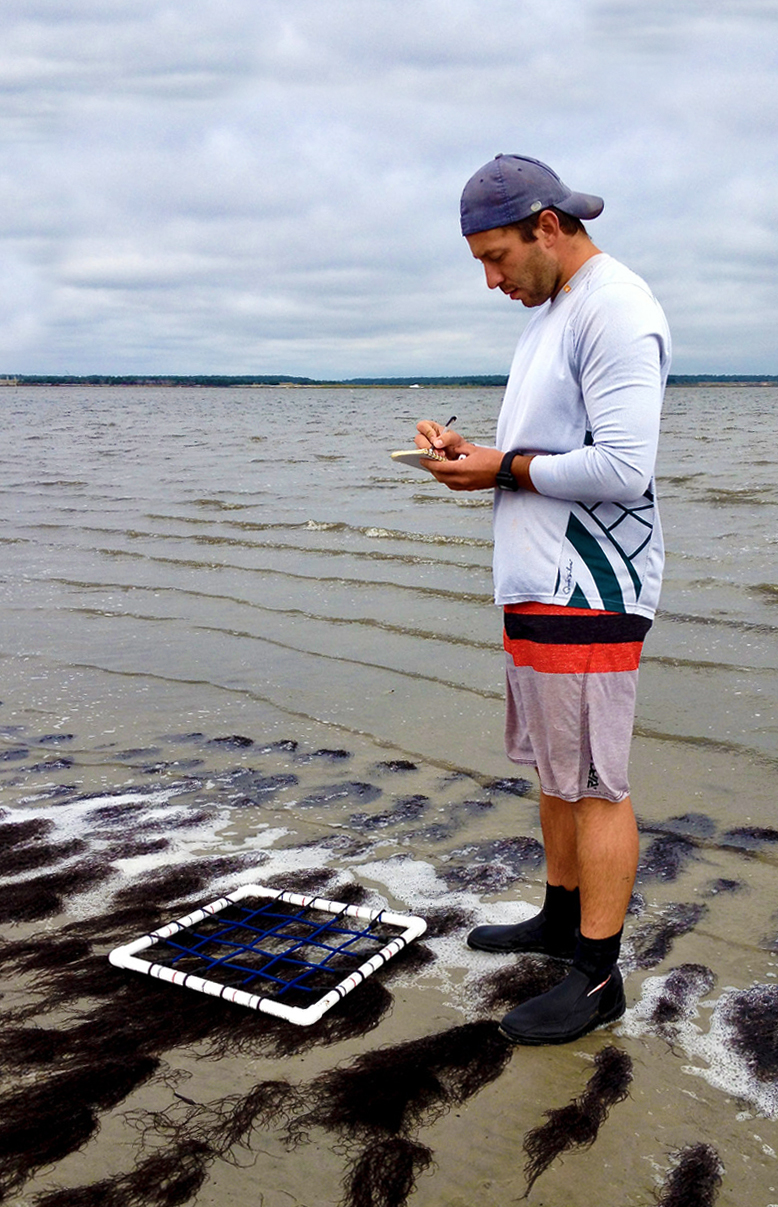 "Aaron Ramus, winner of the 2020 Coastal Research Fellowship, is investigating the effects of Gracilaria vermiculophylla (""Grac"") on estuarine lagoons."