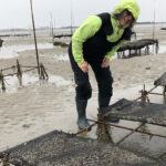 Carla Barbieri of Cary, North Carolina, observes oysters in production on a shellfish farm tour in early March. Photo by Jane Harrison