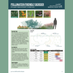 An example of the pollinator-friendly design template