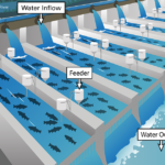 An illustration of flow-through aquaculture systems, or raceways. Illustration by Melissa D. Smith