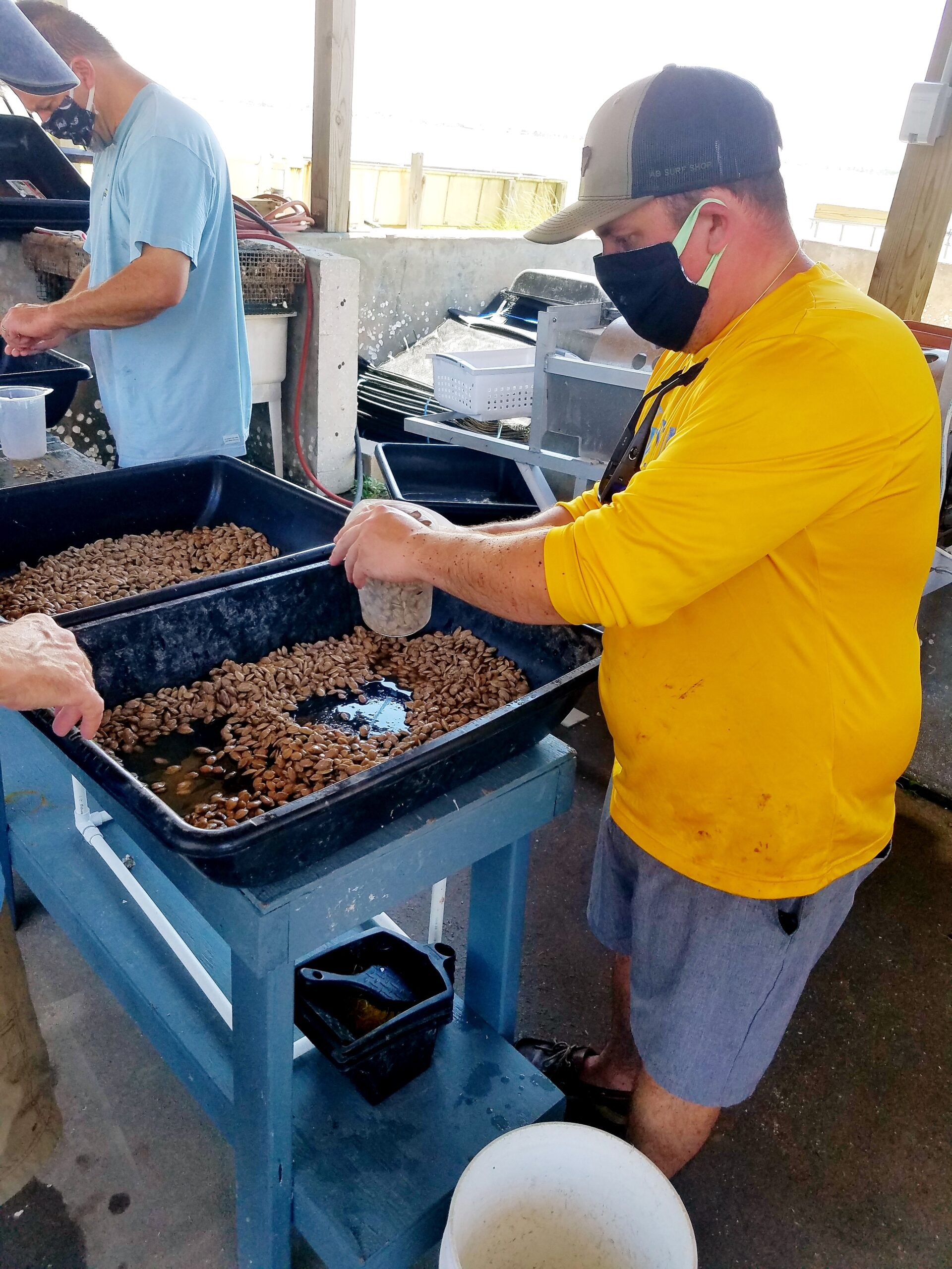 Students learn to grade and count shellfish seed.